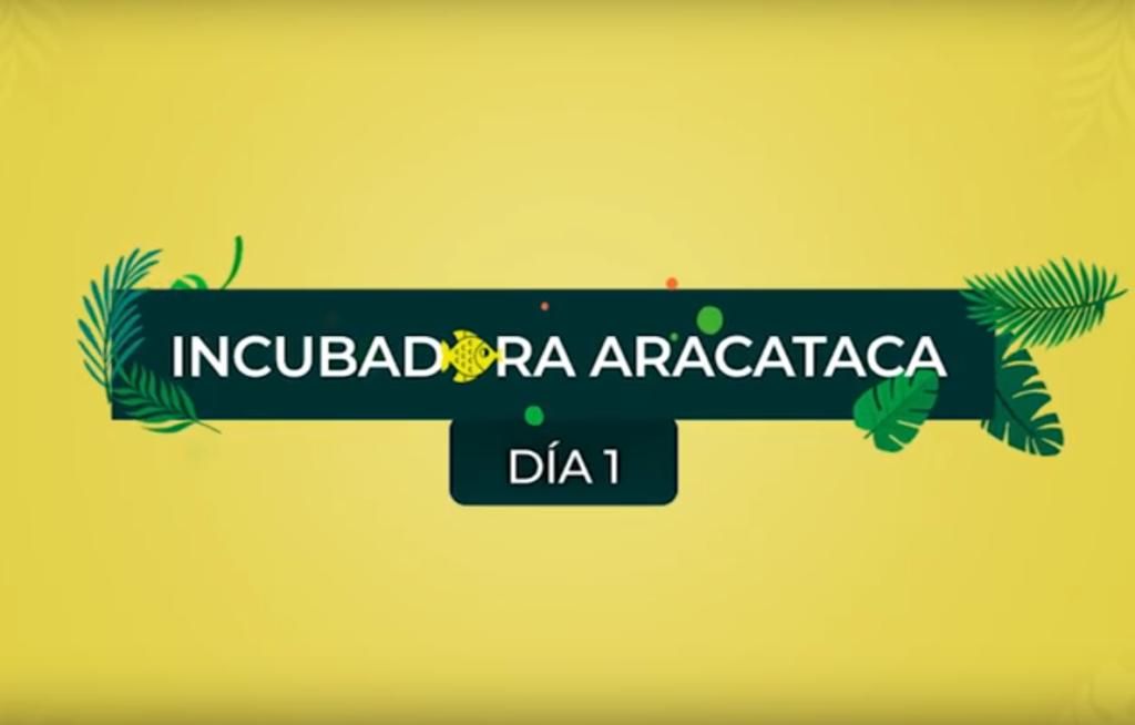 El día a día de la Incubadora Aracataca